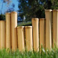 DIY Bamboo Borders